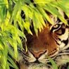 Animals and Nature